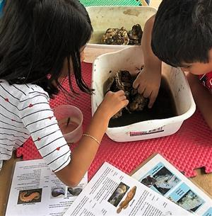 Students exploring sea creatures