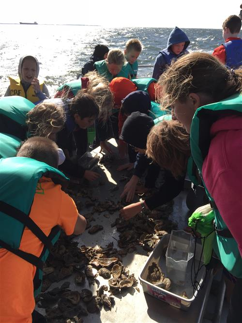 7th grade STEM students from Central Middle on the Chesapeake Bay learning about oysters how they keep water healthy.